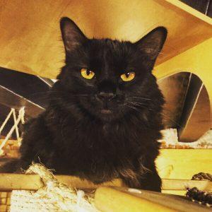 Clementina, adoptada 15
