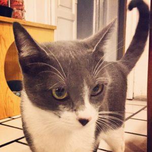 Mila, adoptada 11