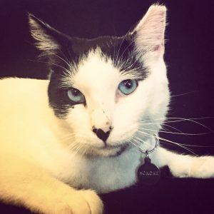 Monche, adoptado 14