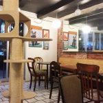 Vista de La Gatería Cat Café, México DF