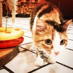 Pimienta, tercera adoptada