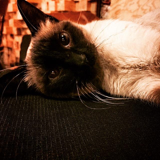 Celina, cuarta adoptada