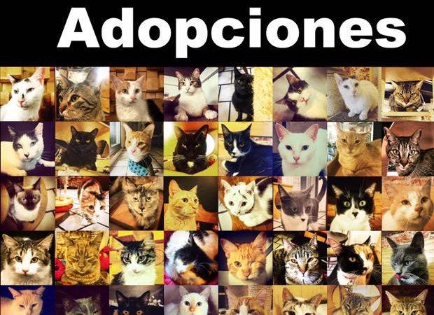 50 adopciones