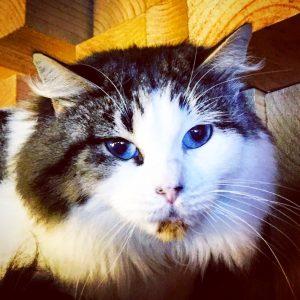 Mica, adoptada 56