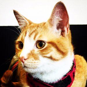 Tomás, adoptado 53