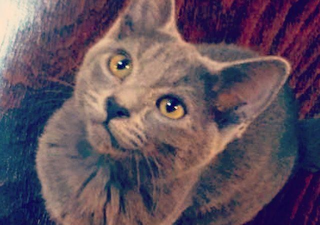 Bety, adoptada 105