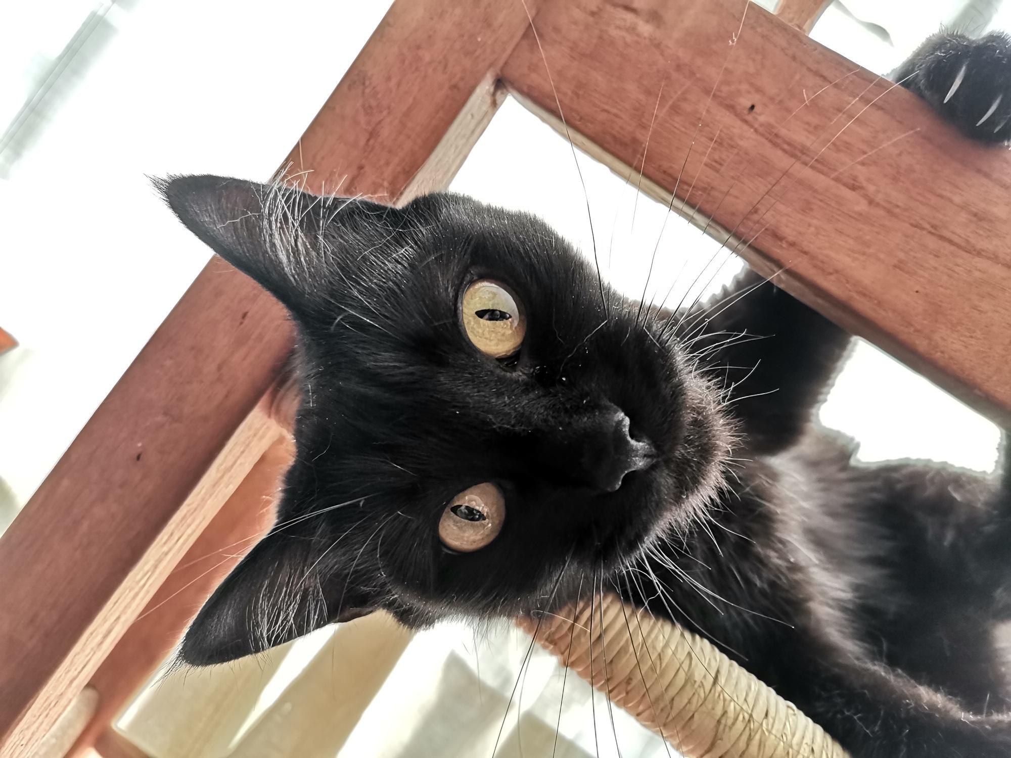 Reseña de libro: Solo necesito un gato