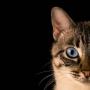5 gatos que entraron a los Guinness World Records